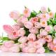 Пусть жизнь одарит вас всеми своими благами! Поздравление Донецкой областной организации ПМГУ